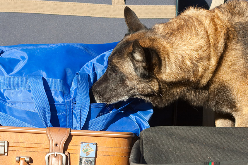 explosives detection - k9 security services
